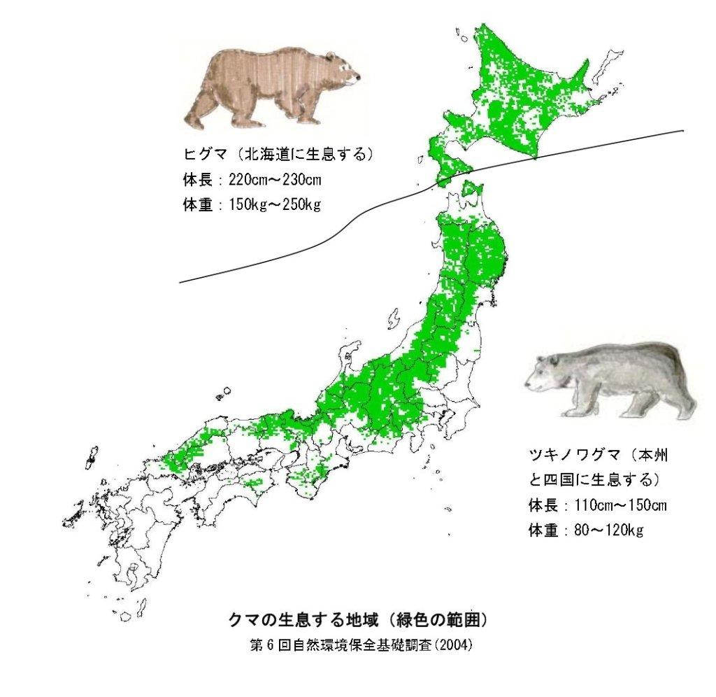 ヒ グ マ ( 北 海 道 に 生 息 す る )  体 長 : 220Cm ~ 230Cm  体 重 : 150kg ~ 250kg  0  ク マ の 生 息 す る 地 域 ( 緑 色 の 範 囲 )  第 6 回 自 然 環 境 保 全 基 礎 調 査 ( 2004 )  ッ キ ノ ワ グ マ ( 本 州  と 匹 国 に 生 息 す る )  体 長 : 110Cm ~ 150Cm  体 重 : 80 ~ 120kg