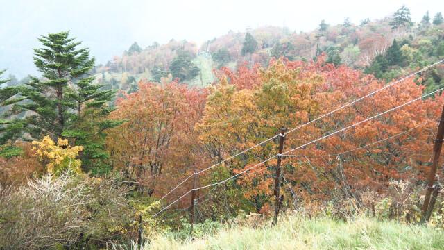 西島駅から見た紅葉