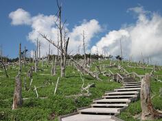 登山トレッキングハイキング05